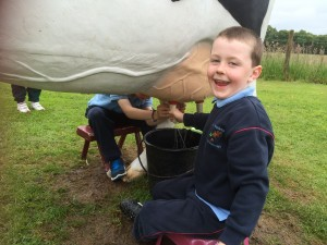 Alex and Daniel give a master class on milking!